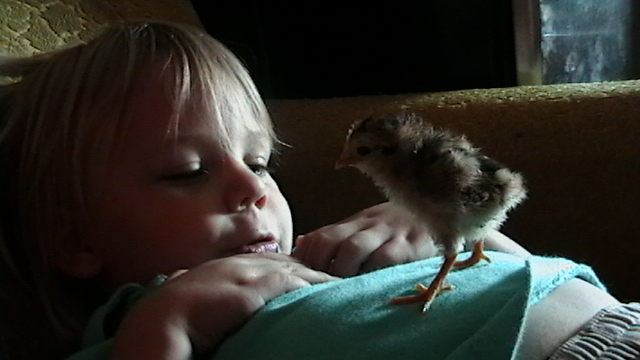 joey and day old chick